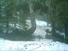 Ketchikan - Deer Mountain Trail 18