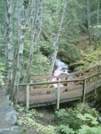 Skagway Trail System Bridge by camojack in Special Points of Interest