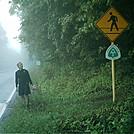 Route 311 road crossing by camojack in Trail & Blazes in Virginia & West Virginia