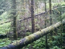 Behind My Cabin In Alaska by camojack in Special Points of Interest