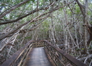 Florida - The Everglades, Mostly