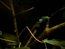 Green Snake by camojack in Special Points of Interest