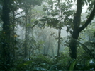 Monteverde Cloud Forest by camojack in Special Points of Interest
