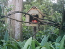 Parrots In The National Zoo by camojack in Special Points of Interest
