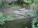 'gators In The National Zoo by camojack in Special Points of Interest