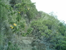 Muliwai Trail Flowers by camojack in Special Points of Interest