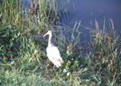 Florida - The Everglades, Mostly by camojack in Other Trails