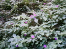 Hanakapi'ai Falls Trail Flowers by camojack in Special Points of Interest