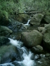 Kalalau Trail - Stream 2 by camojack in Special Points of Interest