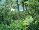 Kalalau Trail View 4 by camojack in Special Points of Interest
