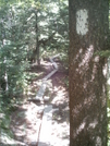Boardwalk 4 by camojack in Trail and Blazes in Massachusetts
