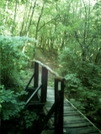 Footbridge North Of North Adams, Ma by camojack in Trail and Blazes in Massachusetts