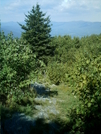 View From Mt. Williams Summit by camojack in Trail and Blazes in Massachusetts