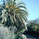 S. CA 2011 Batiquitos Lagoon date palm by camojack in Special Points of Interest