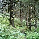 Spruce Island Alaska - hike from Ouzinkie to Sunny Cove 4 by camojack in Special Points of Interest