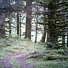 Spruce Island Alaska - hike from Ouzinkie to Sunny Cove by camojack in Special Points of Interest