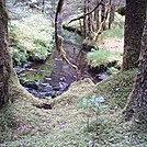 Spruce Island, Alaska - stream by trail back from Mt. Herman 2 by camojack in Special Points of Interest