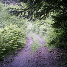 Spruce Island, Alaska - trail back from Mt. Herman 10 by camojack in Special Points of Interest