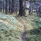 Spruce Island, Alaska - trail back from Mt. Herman 7 by camojack in Special Points of Interest
