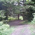 Spruce Island, Alaska - trail back from Mt. Herman 8 by camojack in Special Points of Interest