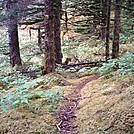 Spruce Island, Alaska - trail to Mt. Herman summit by camojack in Special Points of Interest