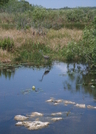 Florida Everglades, Mostly by camojack in Other Trails
