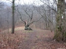 Tree at Bly Gap by white rabbit in Views in North Carolina & Tennessee