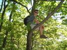 Johnson Up A Tree