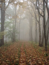 Misty Day by Yonah Ada-Hi in Trail & Blazes in North Carolina & Tennessee