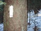Roan Mountain Traverse Dec 2009 by Yonah Ada-Hi in Trail & Blazes in North Carolina & Tennessee