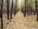 Perfect Trail by adh24 in Trail & Blazes in Virginia & West Virginia