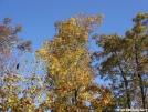 DSC03038 by adh24 in Trail & Blazes in Virginia & West Virginia