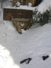 Winter on Roan Mountain, TN '10 by mountain squid in Views in North Carolina & Tennessee