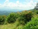 Roan Highlands TN/NC, 6/24/10 by mountain squid in Views in North Carolina & Tennessee