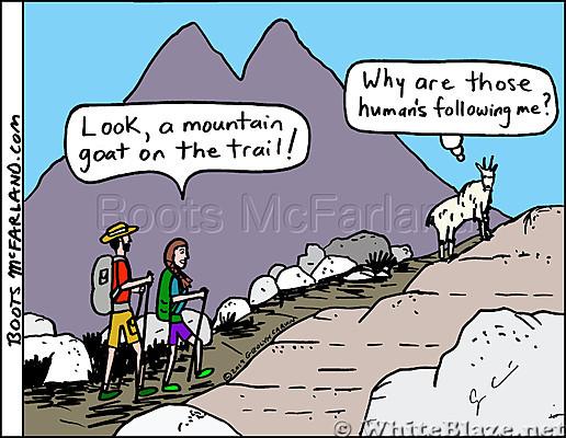 Mt Goat