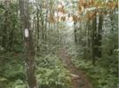 AT in Vermont by Gorp-Gobbler in Trail & Blazes in Vermont