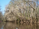 Congaree Swamp, Sc by OldStormcrow in Other
