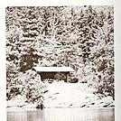 Little Rock Pond Island Shelter