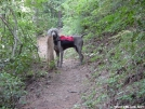 My Hiking Buddy by UnkaJesse in North Carolina & Tennessee Shelters