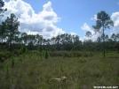 FNST -- Pine scrub prairie by Amigi'sLastStand in Other Trails