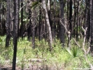 FNST -- forest fire by Amigi'sLastStand in Other Trails