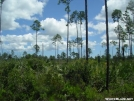 FNST -- Palm regrowth by Amigi'sLastStand in Other Trails