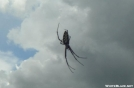 """4"""" spider on the FNST by Amigi'sLastStand in Other"""