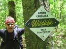 Bear Sanctuary by deadhiker in Bears