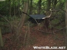 stealth sites by stokell in Hammock camping