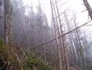 Smoky's Pics