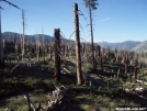 Burnt area just south of Red's Meadow on the PCT/JMT by MOWGLI in Pacific Crest Trail