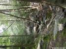 Rausch Creek by Chalumeau in Views in Maryland & Pennsylvania