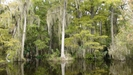 Scene From Big Cypress Gallery
