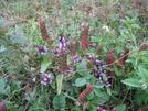 Grayson Highlands Flora by Egads in Views in Virginia & West Virginia